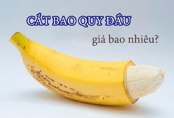 cat-bao-quy-dau-gia-bao-nhieu-tien